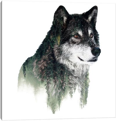 Wolf I Canvas Print #PEK71