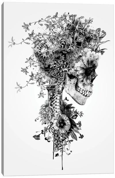 Skull B&W Canvas Art Print