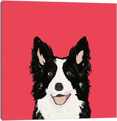Border Collie Canvas Print #PET12