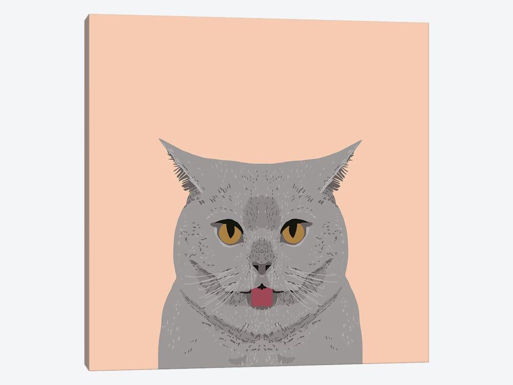 British Shorthair by Pet Friendly 1-piece Canvas Art