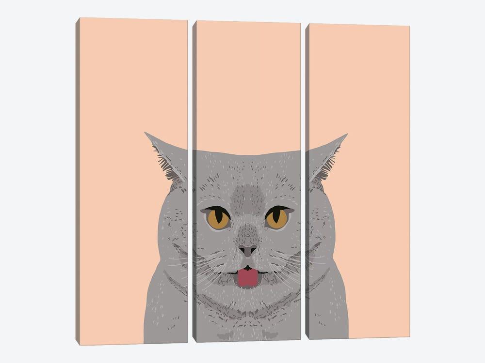 British Shorthair by Pet Friendly 3-piece Canvas Art