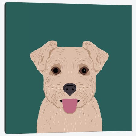 Norfolk Terrier Canvas Print #PET53} by Pet Friendly Canvas Art