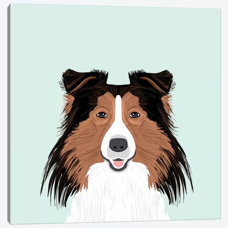 Shetland Sheepdog Canvas Print #PET62} by Pet Friendly Canvas Print