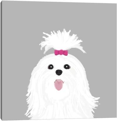 Shih Tzu Canvas Print #PET65