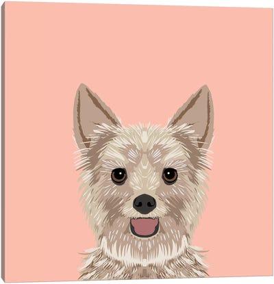 Yorkshire Terrier Canvas Print #PET69