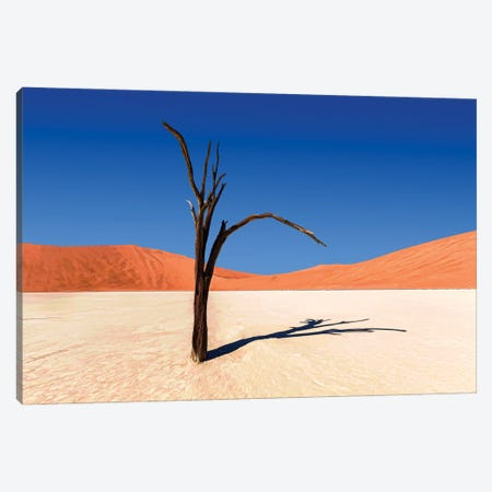 Camelthorn Tree Panorama Canvas Print #PEW124} by Peter Walton Canvas Wall Art