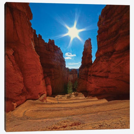 Dscending Into Bryce Canyon Canvas Print #PEW125} by Peter Walton Canvas Artwork