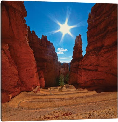 Dscending Into Bryce Canyon Canvas Art Print