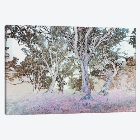 Forest Dreaming Canvas Print #PEW129} by Peter Walton Canvas Print