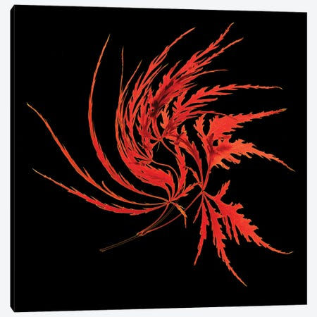 Thi Red Leaves Canvas Print #PEW142} by Peter Walton Art Print