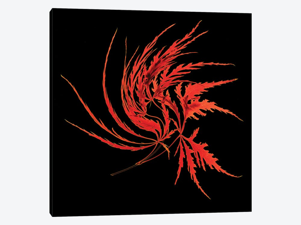 Thi Red Leaves by Peter Walton 1-piece Canvas Art Print