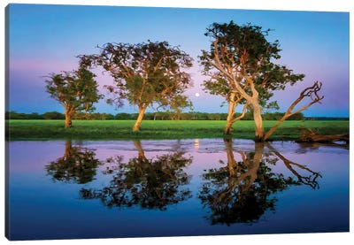 Moonrise at Kakadu Canvas Art Print