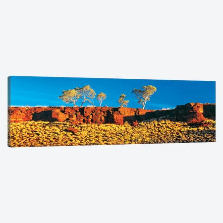 Snappy Gum Panorama Canvas Print #PEW175} by Peter Walton Art Print