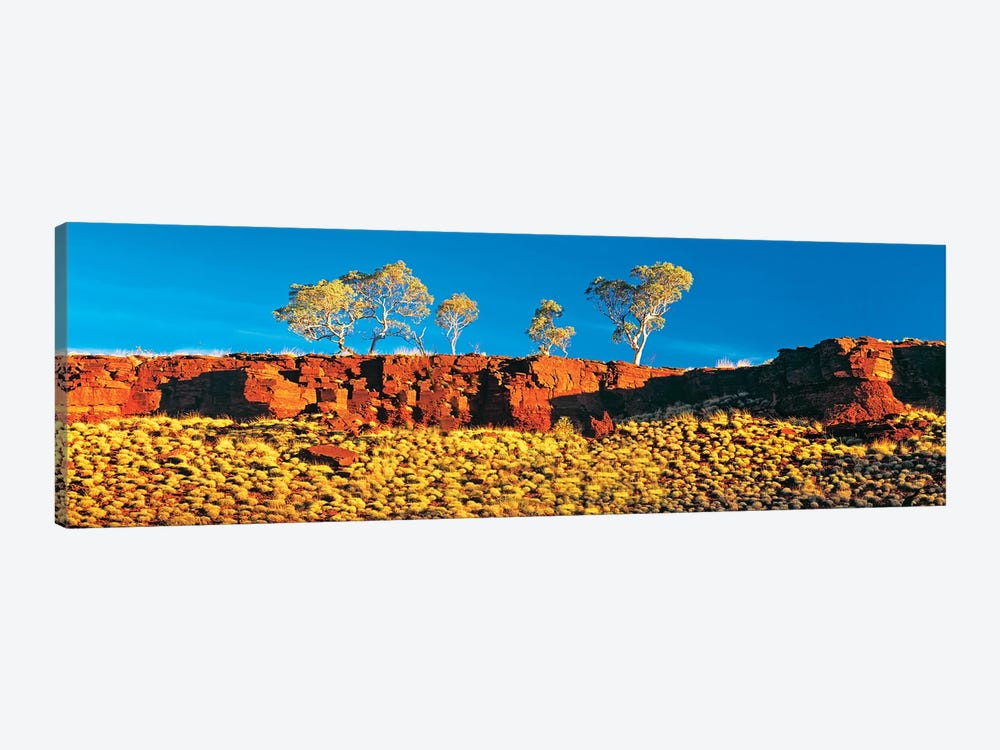 Snappy Gum Panorama by Peter Walton 1-piece Canvas Print