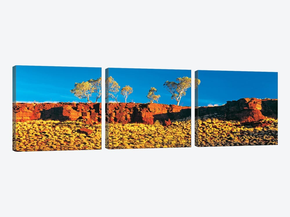 Snappy Gum Panorama by Peter Walton 3-piece Art Print