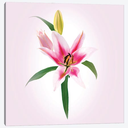 Elegant Lily Canvas Print #PEW177} by Peter Walton Art Print