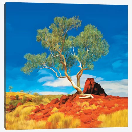 Pilbara Gum Tree Canvas Print #PEW179} by Peter Walton Canvas Wall Art