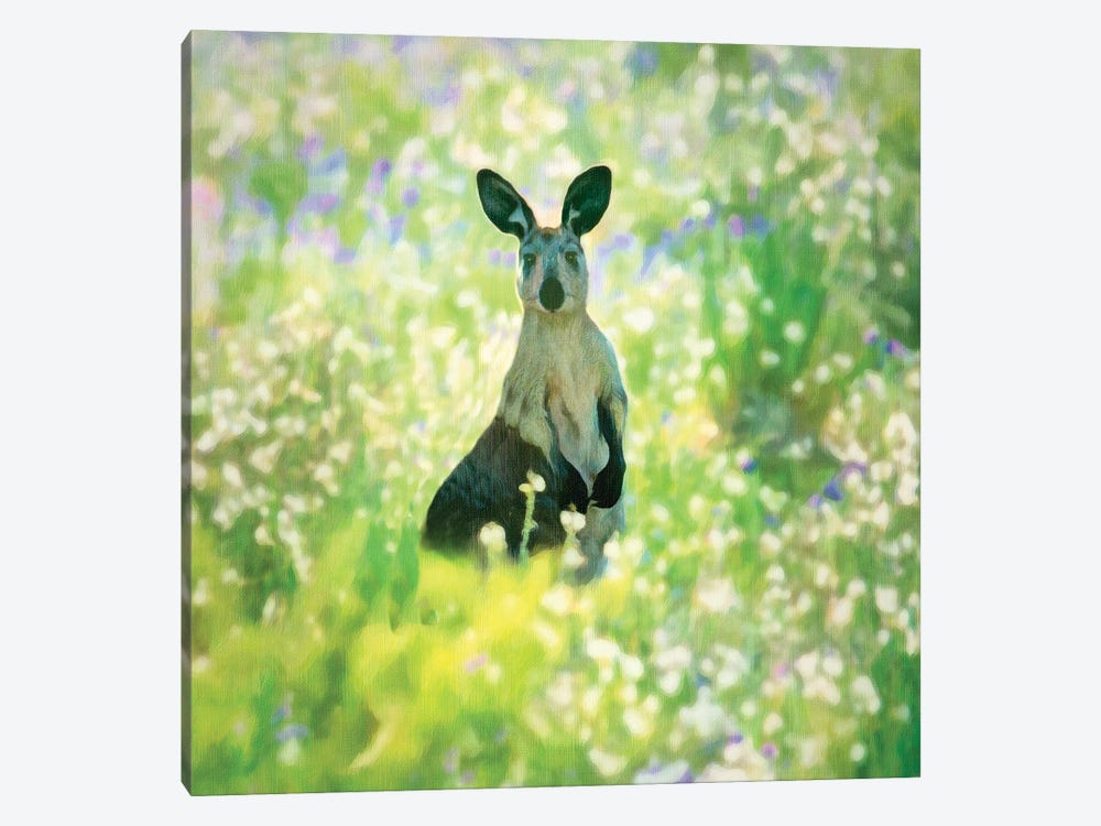 Curious Kangaroo by Peter Walton 1-piece Art Print