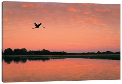 Jabiru In Flight Canvas Art Print