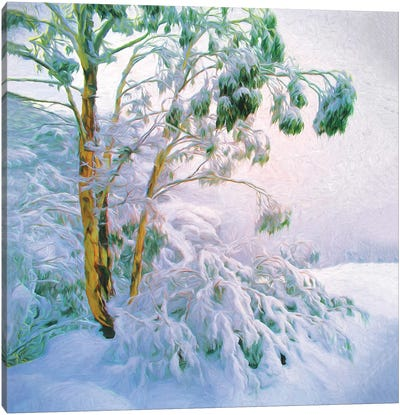 Buffalo Snow Gums Canvas Art Print
