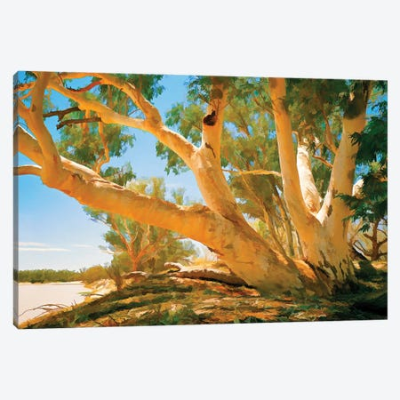 Coopers Creek Gums Canvas Print #PEW196} by Peter Walton Canvas Art Print