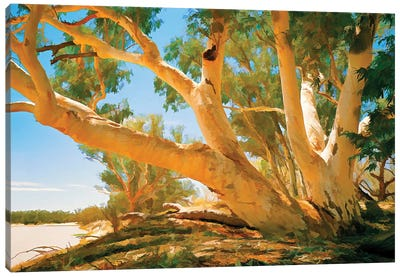 Coopers Creek Gums Canvas Art Print