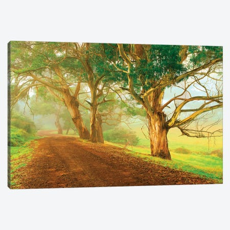 Eucalyptus Lined Track Canvas Print #PEW197} by Peter Walton Canvas Print