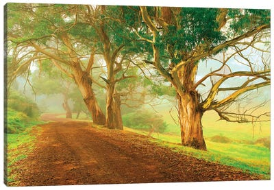 Eucalyptus Lined Track Canvas Art Print