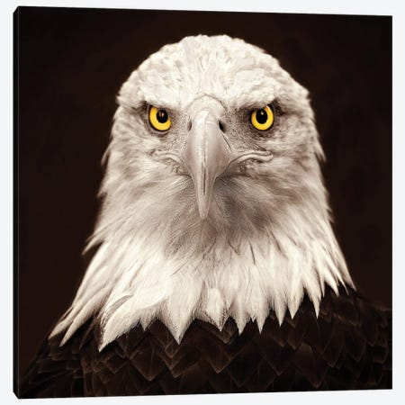Eagle Eyes Canvas Print #PEW21} by Peter Walton Canvas Wall Art