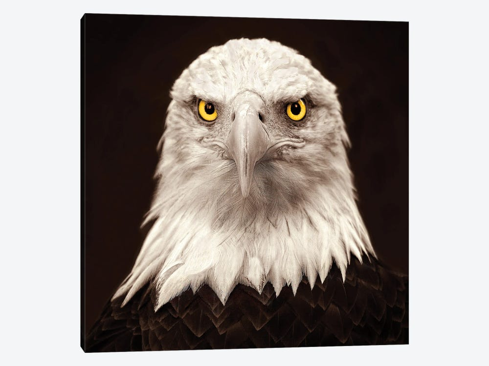 Eagle Eyes by Peter Walton 1-piece Canvas Art Print