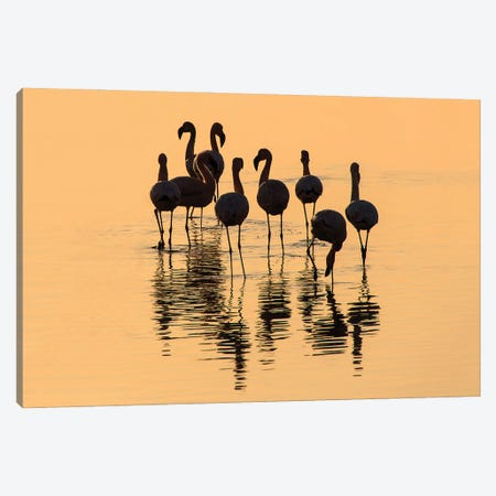 Flamingo Gathering Canvas Print #PEW27} by Peter Walton Canvas Art Print