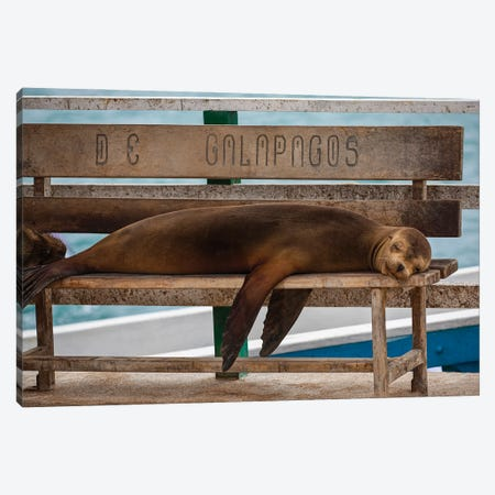 Galapagos Seal Canvas Print #PEW28} by Peter Walton Canvas Wall Art