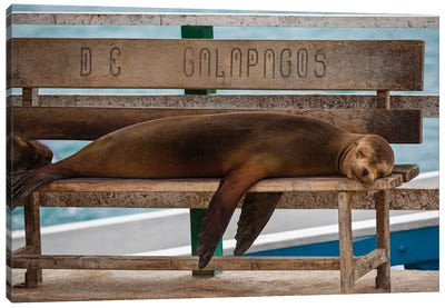 Galapagos Seal Canvas Art Print