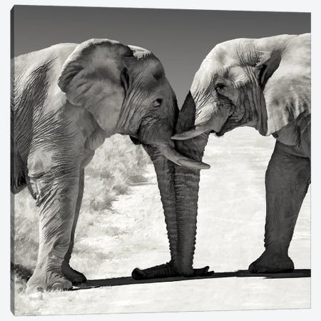Head To Head Canvas Print #PEW31} by Peter Walton Canvas Art Print