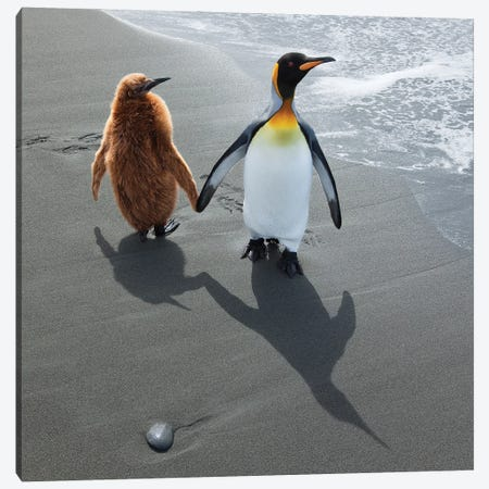 Mother And Baby Penguin Canvas Print #PEW50} by Peter Walton Art Print