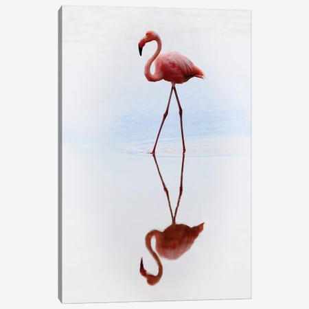 Pink Flamingo Canvas Print #PEW63} by Peter Walton Canvas Art