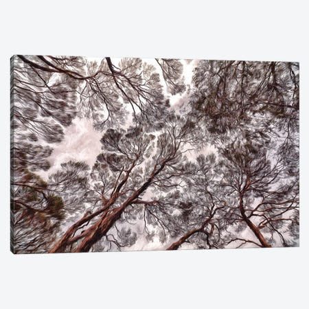 Sarah Island Canopy Canvas Print #PEW71} by Peter Walton Canvas Print
