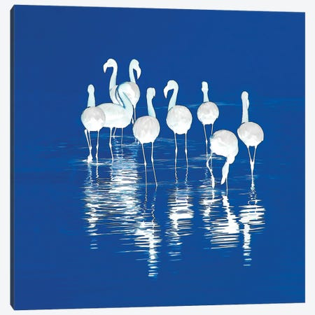 Stand Of Flamingos Canvas Print #PEW75} by Peter Walton Canvas Art