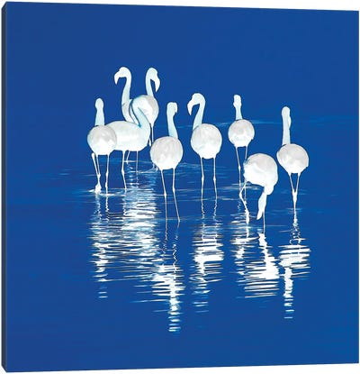 Stand Of Flamingos Canvas Art Print