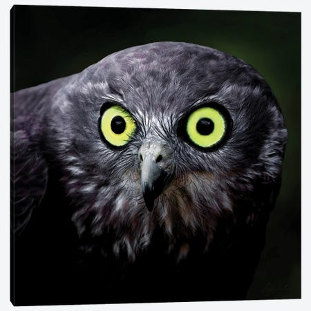Stare Of The Owl Canvas Print #PEW76} by Peter Walton Canvas Art