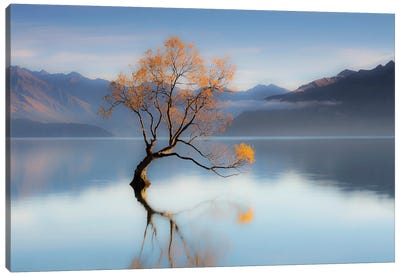 The Wanaka Tree Canvas Art Print