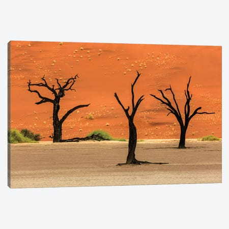 Three Deadvlie Trees Canvas Print #PEW84} by Peter Walton Canvas Art Print