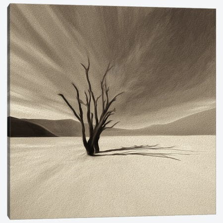 Camelthorn Tree Canvas Print #PEW92} by Peter Walton Canvas Art Print