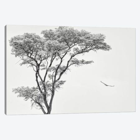 The African Eagle Canvas Print #PFL7} by Piet Flour Canvas Art Print