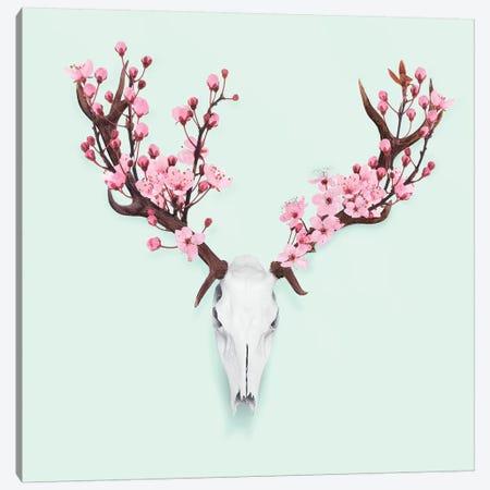 Cherry Blossom Skull Canvas Print #PFU10} by Paul Fuentes Art Print