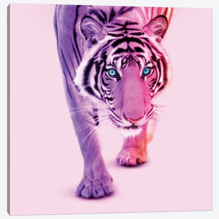 Color Tiger Canvas Print #PFU11} by Paul Fuentes Canvas Art Print