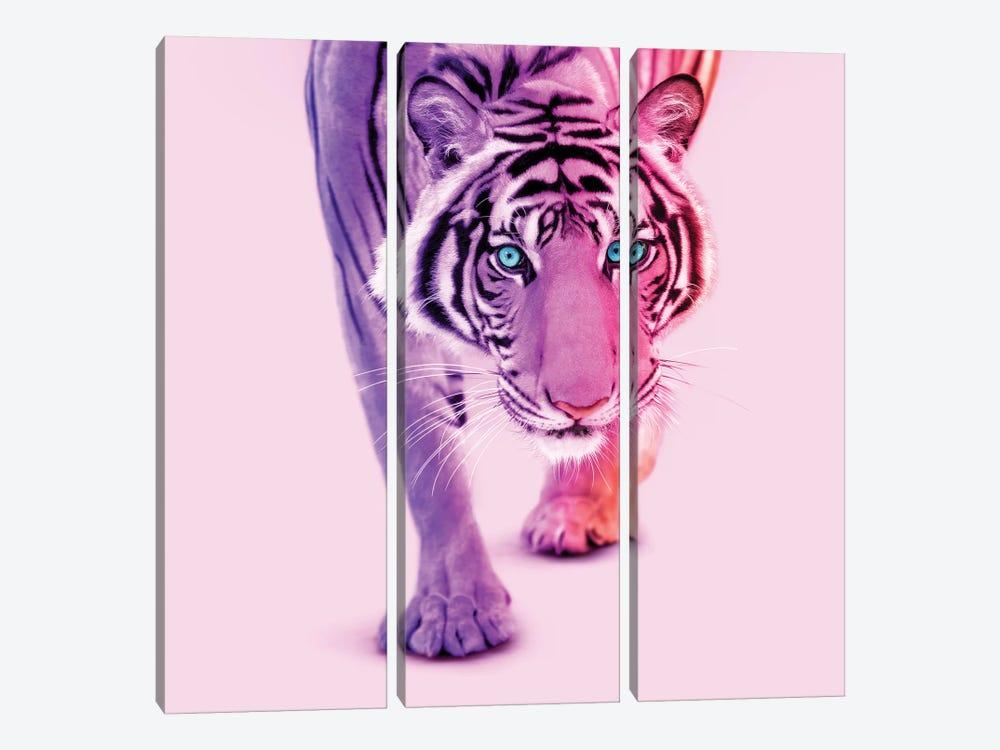Color Tiger by Paul Fuentes 3-piece Art Print