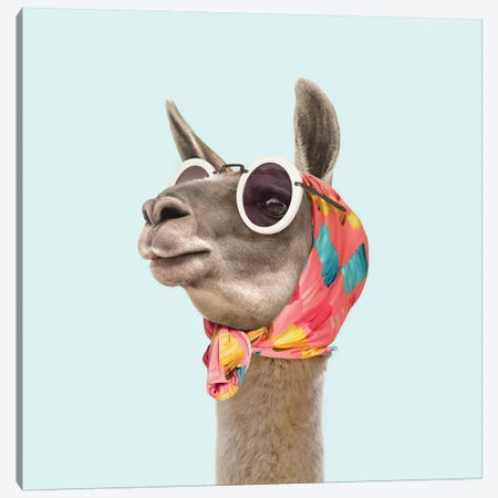 Fashion Llama Canvas Print #PFU12} by Paul Fuentes Art Print