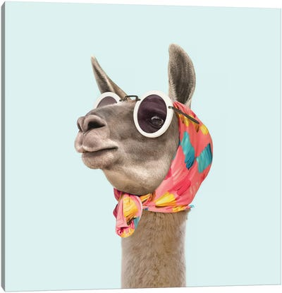 Fashion Llama Canvas Art Print