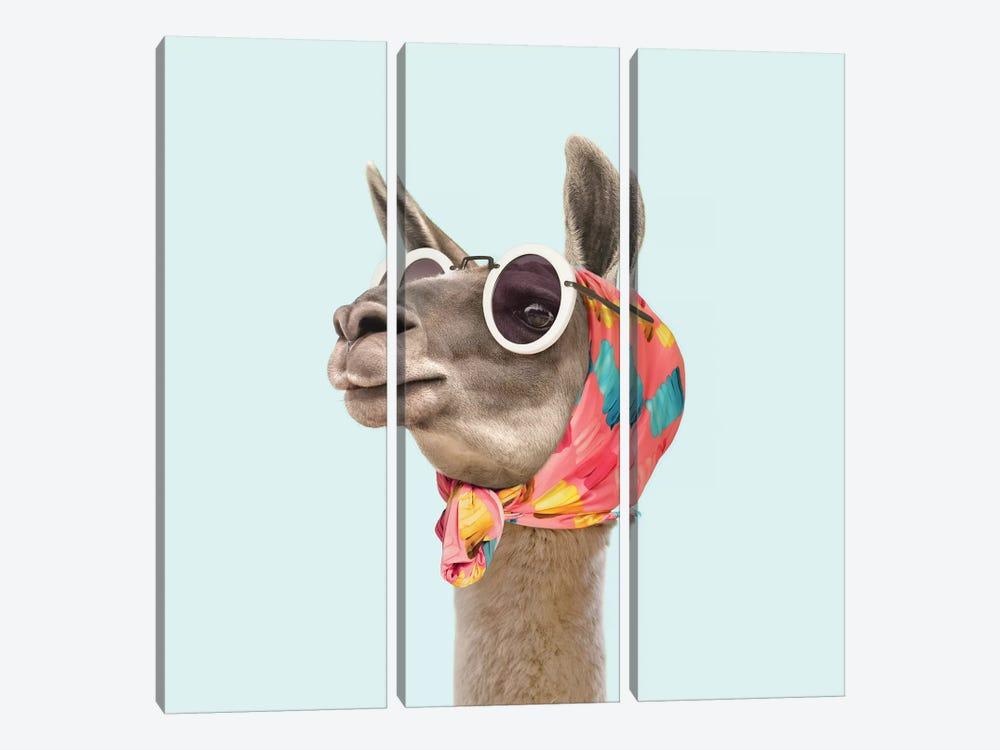 Fashion Llama by Paul Fuentes 3-piece Canvas Wall Art